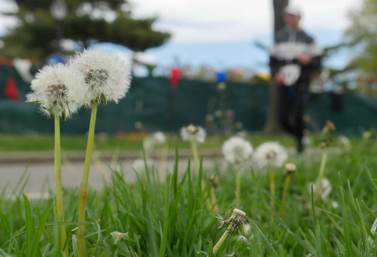 flower-1230563