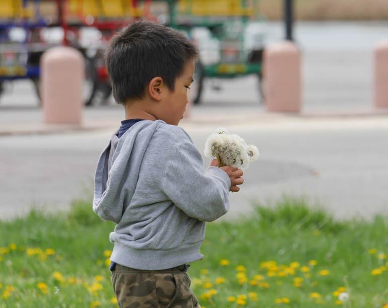flower boy-1220481