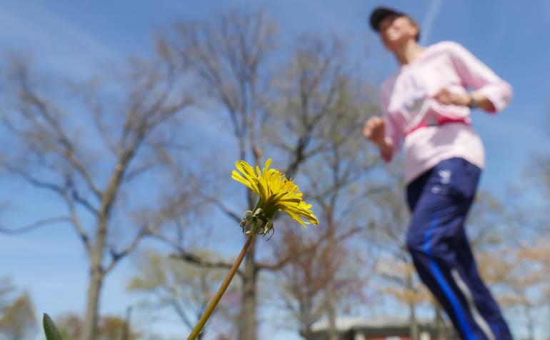 flower karnayat-1210494