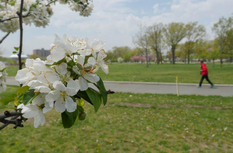 flower mark-1230463