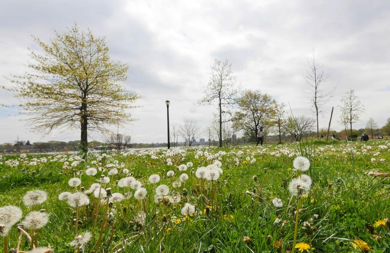 flower meadow-1230755