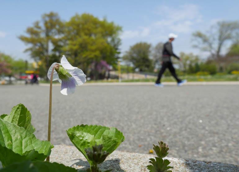 flower michel-1230395