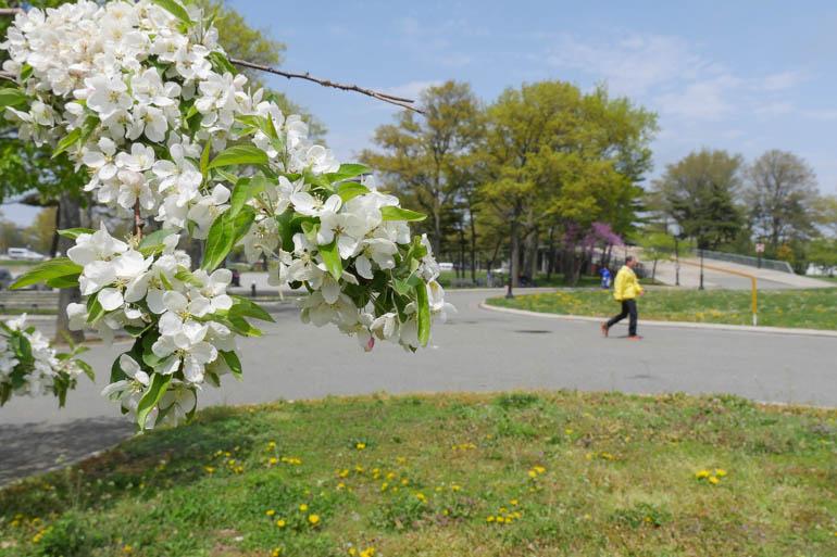 flower sandro-1230393