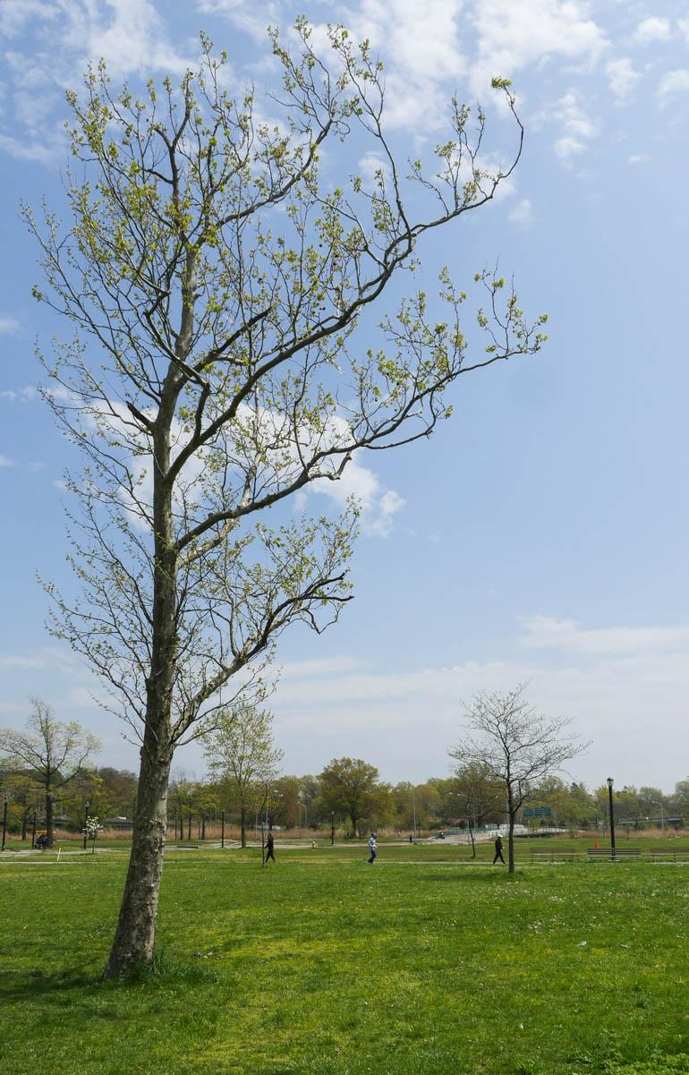 flower tree-1230457