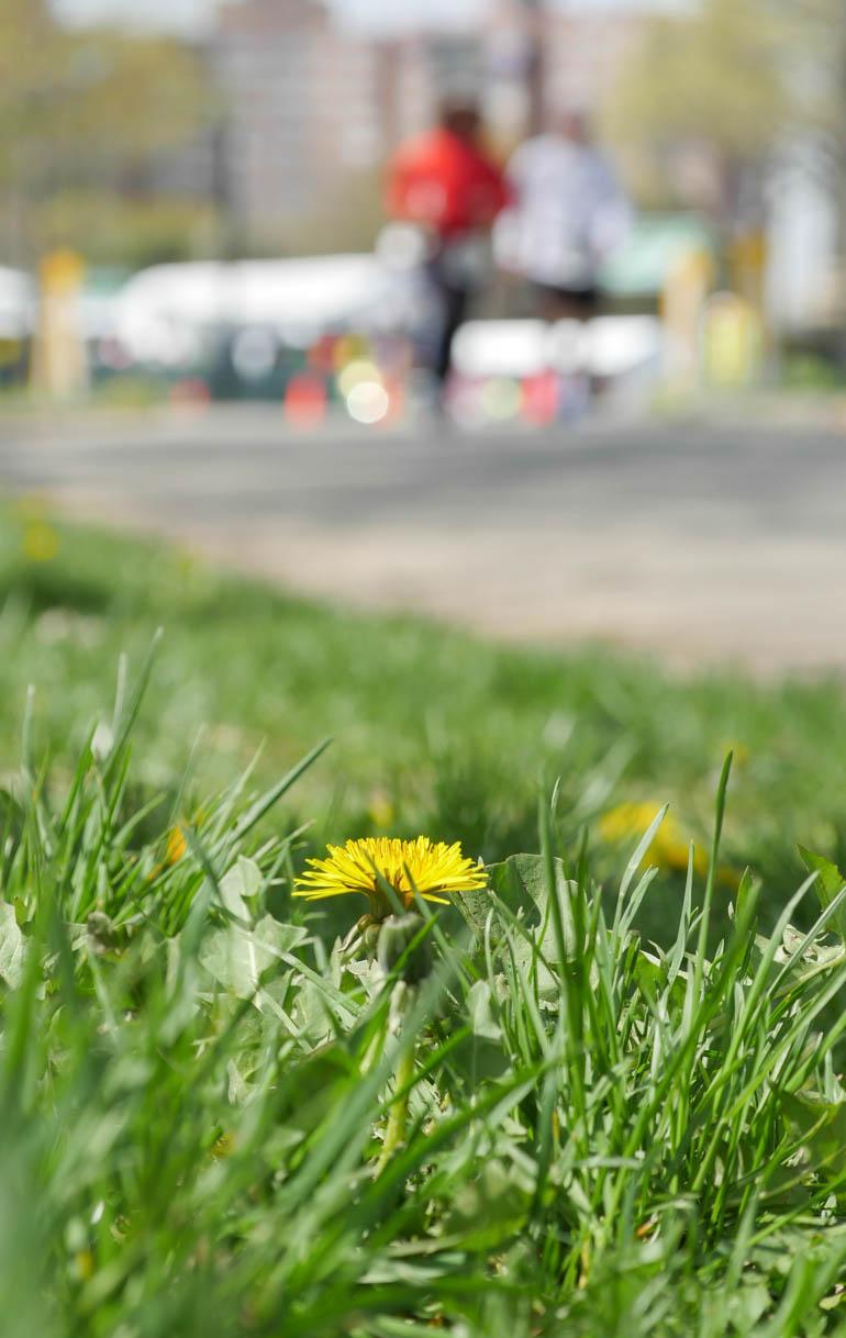 flower volodymyr-1230018