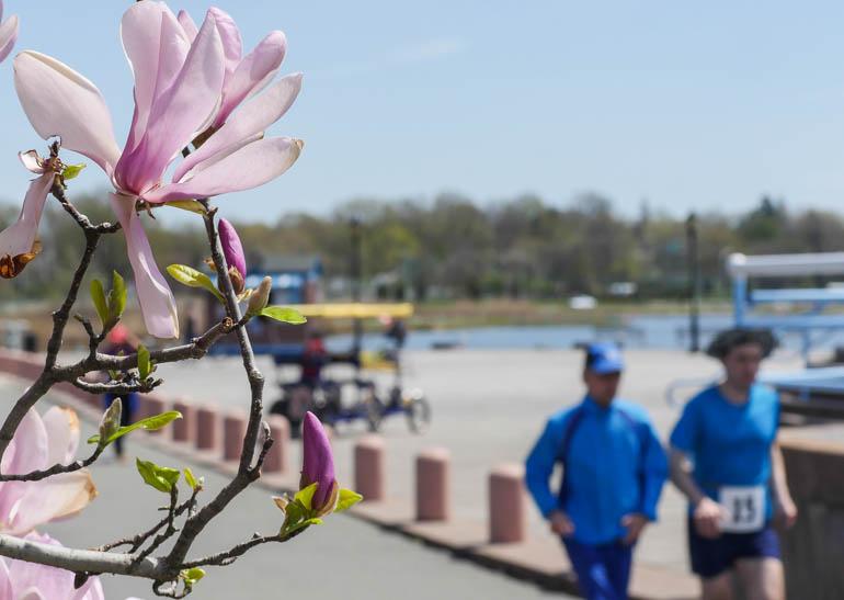 flower2-1210366