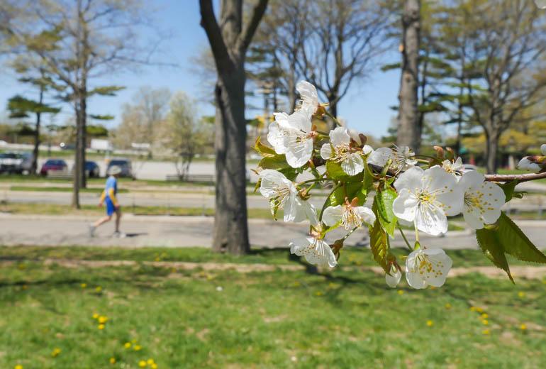 flower2-1210594