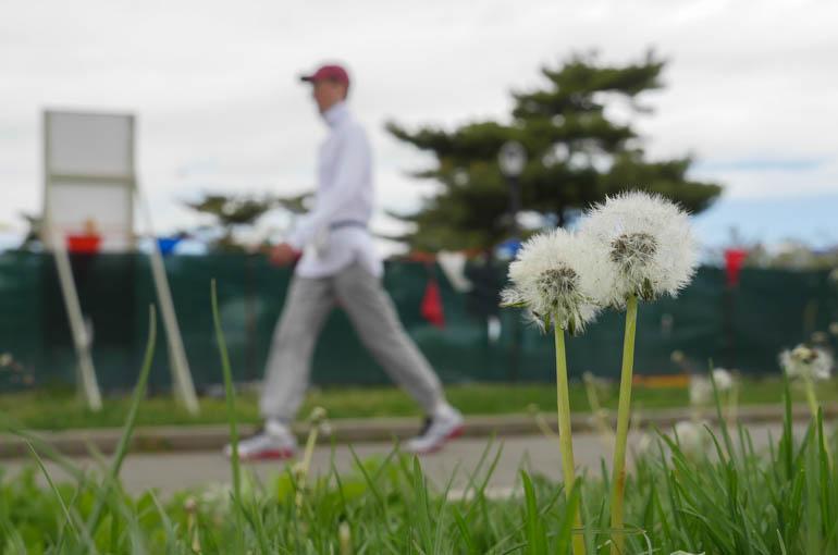 flower2-1230564