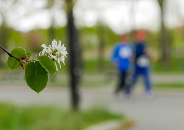 flower3-1230620