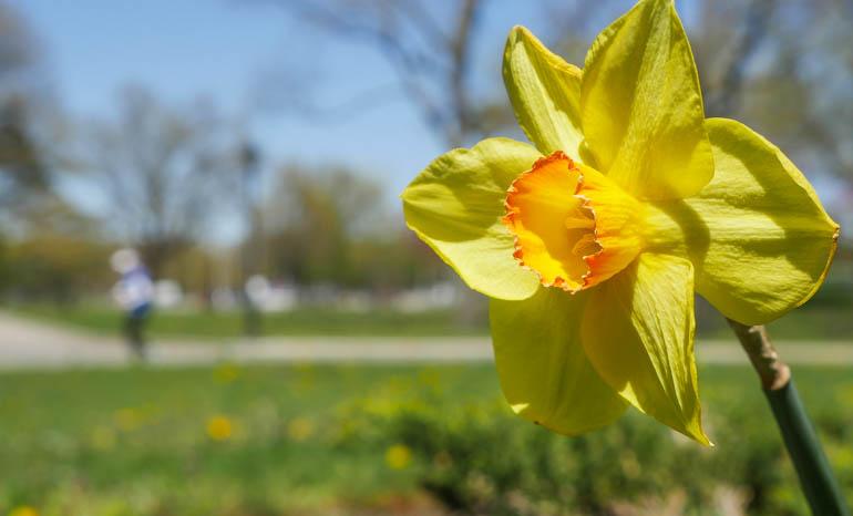 flower4-1210599