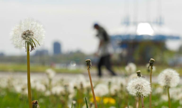 flower4-1230893