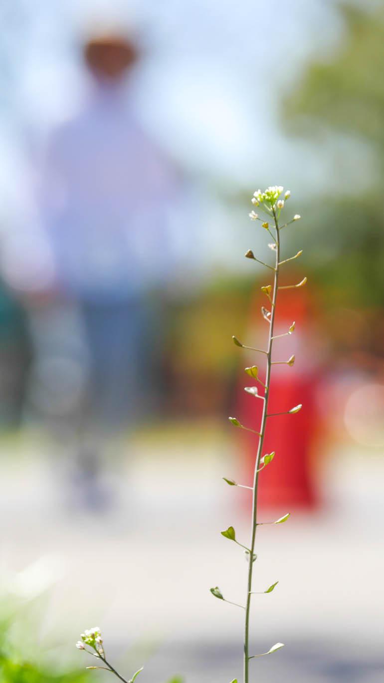 flower5-1210616