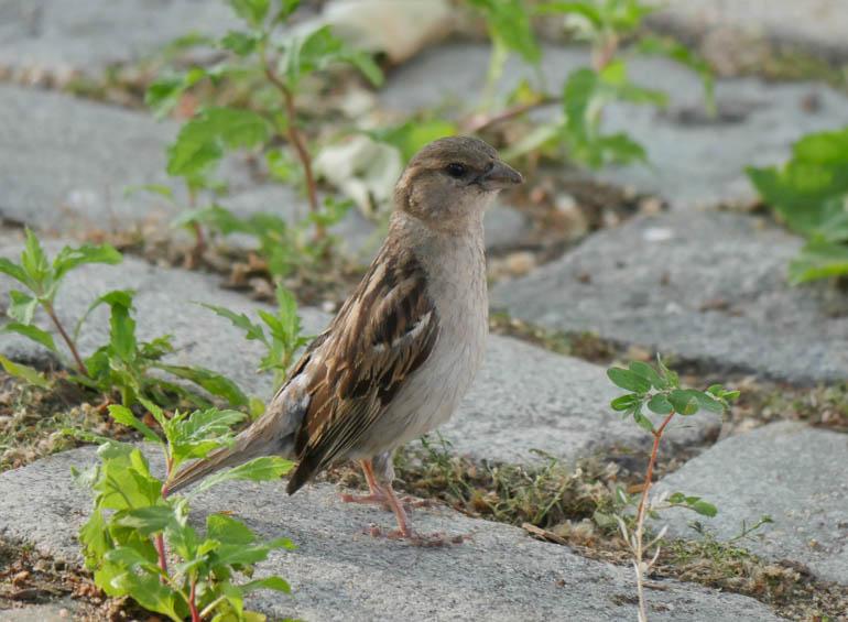 bird-1250087