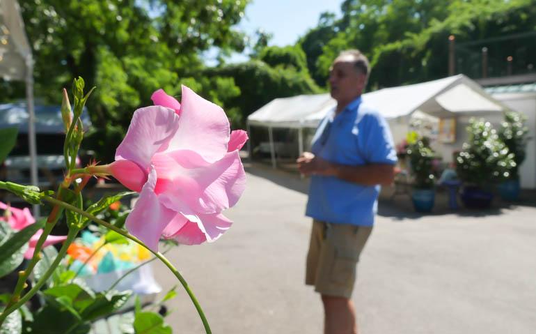 flower rupanta-1240763