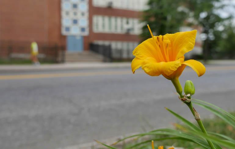 flower2-1260316