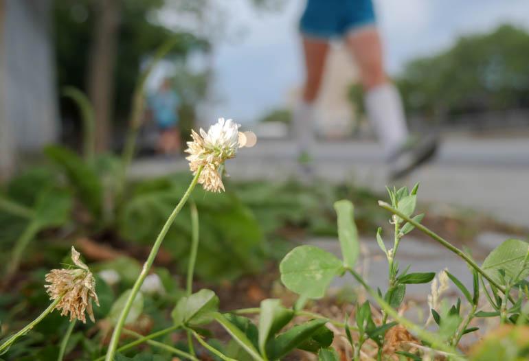 flower4-1250636