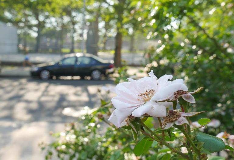 flower6-1250135