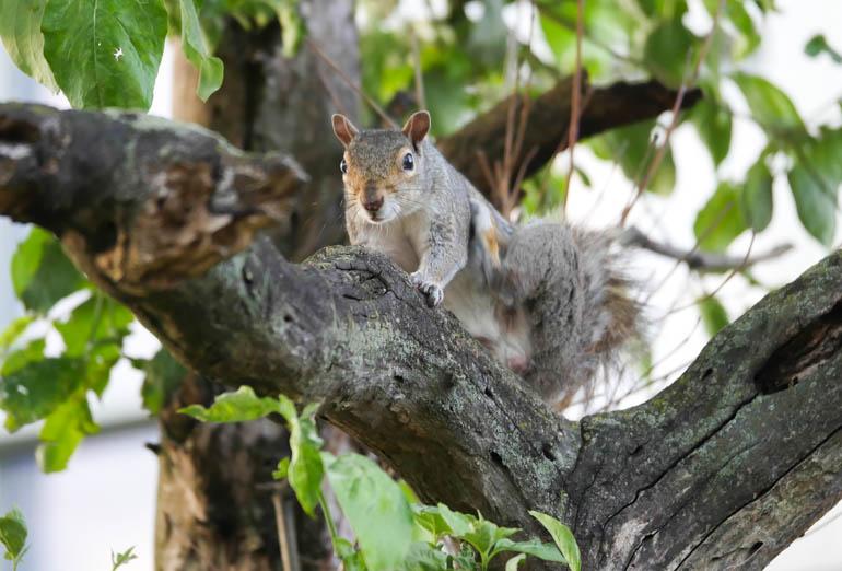squirrel-1240936