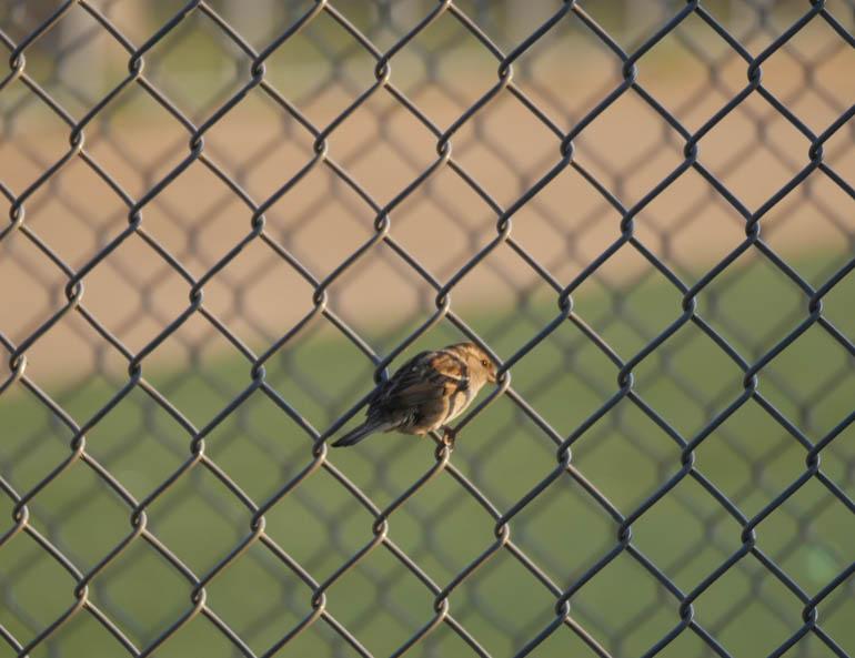 bird-1310330