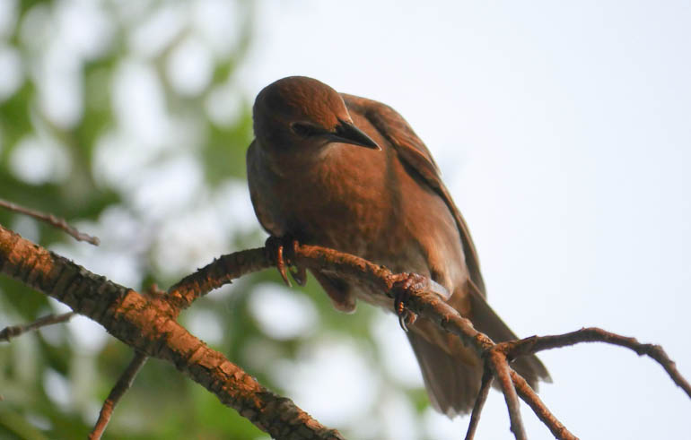 bird-1360277