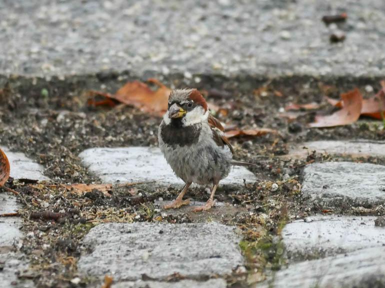 bird-1380873
