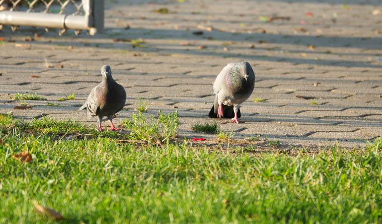 birds-1290889