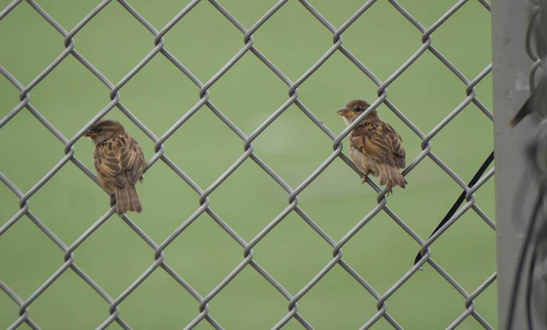 birds-1300398
