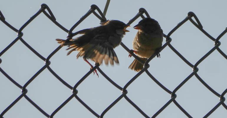 birds-1320895