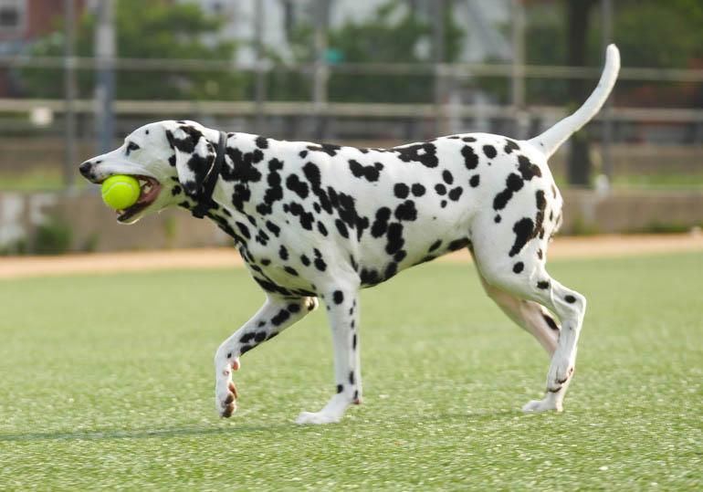 dog-1290249