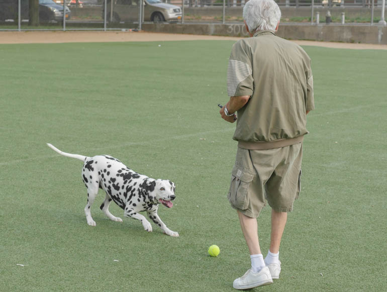 dog-1290255
