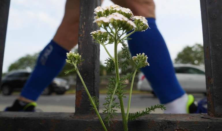 flower-1290233