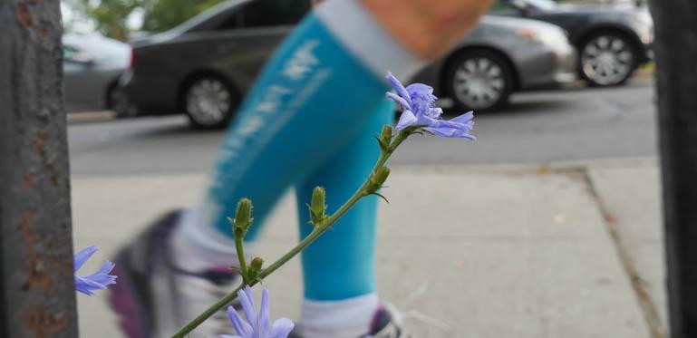 flower-1290234