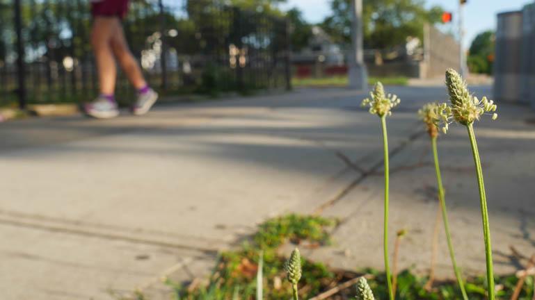 flower-1290806