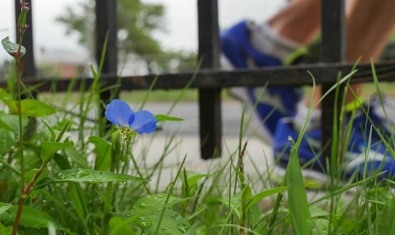 flower-1300416