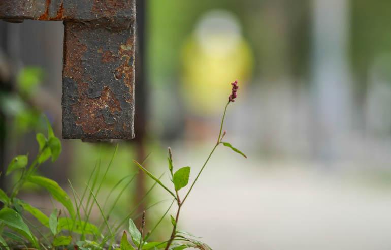 flower-1300453