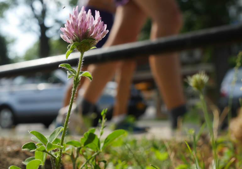 flower-1310255