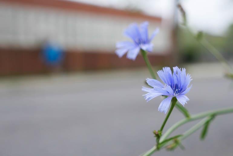flower-1310781
