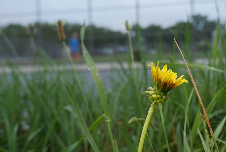 flower-1320109