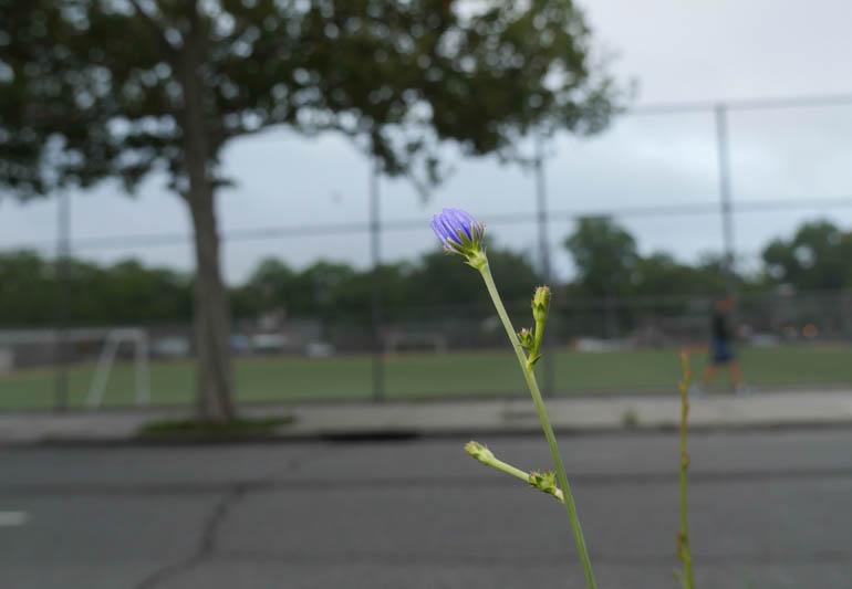 flower-1320111