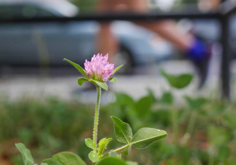 flower-1320115