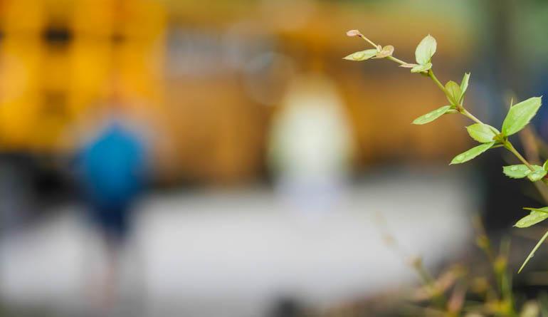 flower-1320332