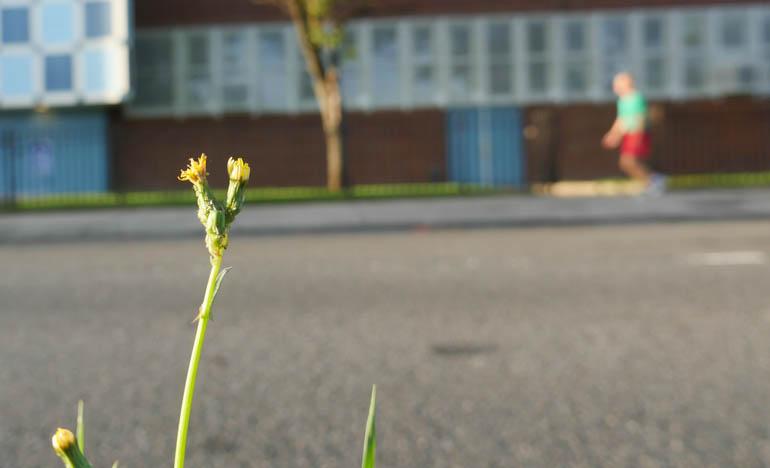 flower-1320521
