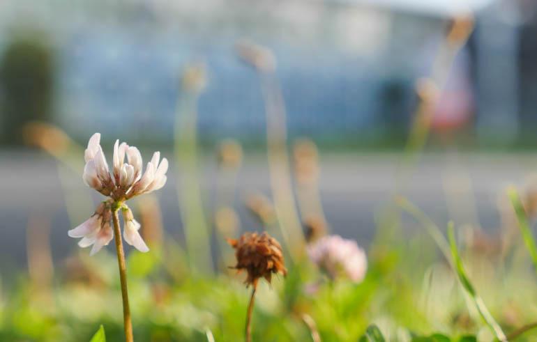 flower-1320539