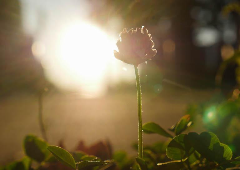 flower-1320725