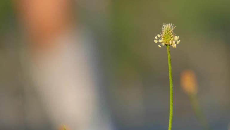 flower-1330173