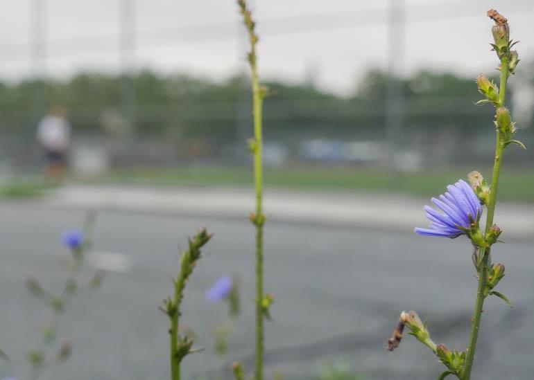 flower-1330389