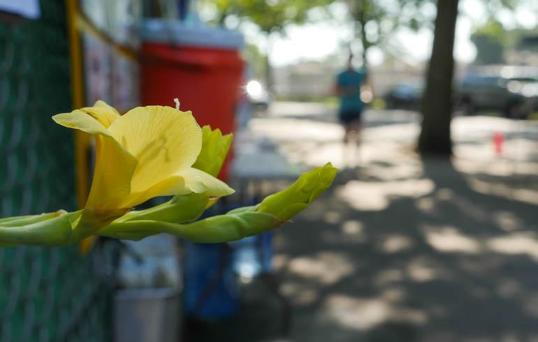 flower-1340050