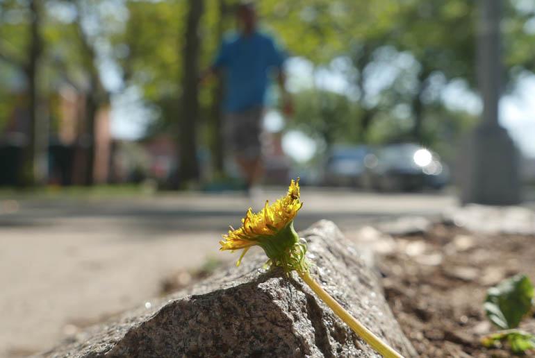 flower-1340052