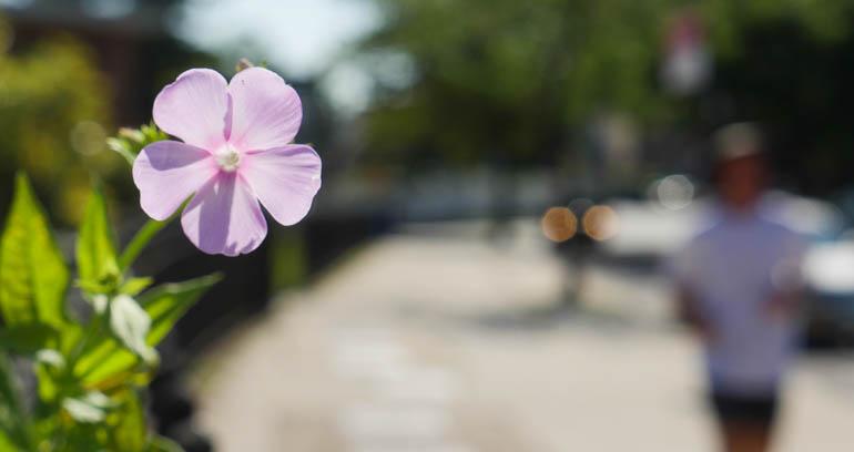 flower-1340060