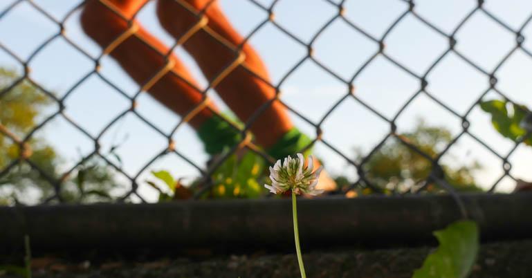 flower-1340140